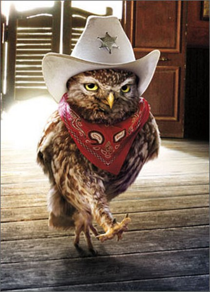 Cowboy Owl (1 card/1 envelope) - Birthday Card  INSIDE: You're a mighty big deal in these parts! HAPPY BIRTHDAY