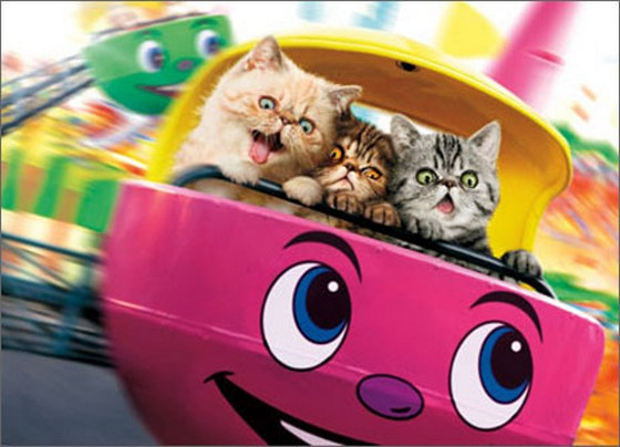 Cats On Carnival Ride (1 card/1 envelope) Avanti Funny Birthday Card  INSIDE: Either we're getting older, or the ride's getting faster! Happy Birthday