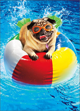 Pug On Beach Ball (1 card/1 envelope) Avanti Funny Dog Birthday Card  INSIDE: Have a ball! Happy Birthday