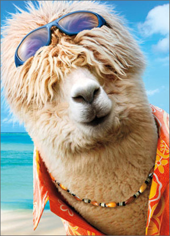Surfer Alpaca (1 card/1 envelope) Avanti Funny Birthday Card  INSIDE: It's like� just a number, man! Happy Birthday
