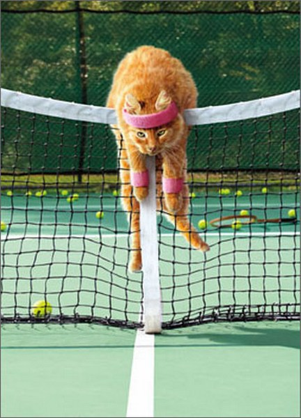 Cat Plays Tennis (1 card/1 envelope) Avanti Funny Just for Fun Card  INSIDE: On the bright side, frustration burns 500 calories per hour!