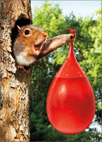 Squirrel Waterballoon (1 card/1 envelope) Avanti Stand Out Pop Up Birthday Card  INSIDE: SPLAT Got ya a little something! Happy Birthday