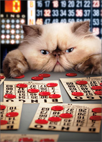Cat Bingo (1 card/1 envelope) - Birthday Card  INSIDE: BINGO You're old! Happy Birthday