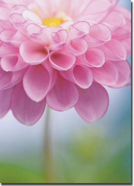 Pink Flower (1 card/1 envelope) Avanti Encouragement Card  INSIDE: You're on my mind and in my heart.