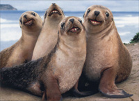 Four Seals On Beach With Teeth (1 card/1 envelope) Avanti Funny Birthday Card