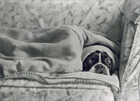 Dog Under Blanket (1 card/1 envelope) - Get Well Card  INSIDE: Heard you were feeling under the weather� Get well soon!