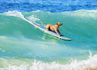 Dog Surfing (1 card/1 envelope) Avanti Encouragement Card