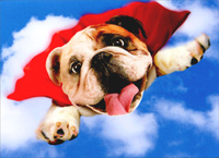 Super Bulldog (1 card/1 envelope) Avanti Funny Dog Birthday Card