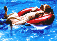 Dog Lying On Innertube (1 card/1 envelope) - Just For Fun Card  INSIDE: I have better things to do� I just choose not to do them!