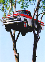 Pick Up Truck In Tree (1 card/1 envelope) Avanti Funny Just For Fun Card