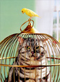 Cat In Birdcage, Bird On Top (1 card/1 envelope) - Just For Fun Card  INSIDE: Don't ask�