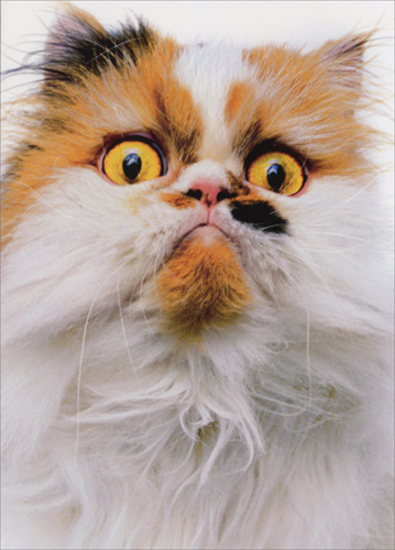 Cat With Attitude (1 card/1 envelope) Avanti Funny Birthday Card  INSIDE: Happy Birthday! You got a problem with that?!