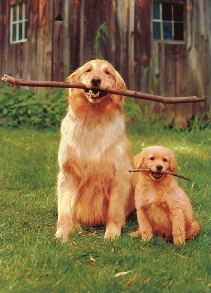 Big/Little Dogs Holding Sticks (1 card/1 envelope) - Father's Day Card - FRONT: No text  INSIDE: I love you big guy!  Happy Father's Day