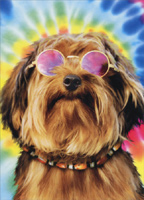 Yorkie With Colored Sunglasses (1 card/1 envelope) Avanti Funny Dog Birthday Card