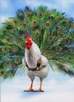 Peacock Chicken (1 card/1 envelope) Avanti Funny Birthday Card