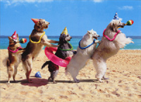 Dog Conga Line (1 card/1 envelope) - Birthday Card  INSIDE: Let's get this party started! Happy Birthday