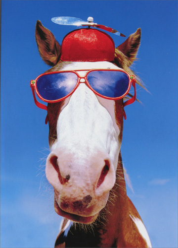 Image Is Loading Silly Horse With Hat And Sunglasses Funny Birthday