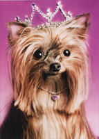 Yorkie Princess (1 card/1 envelope) - Birthday Card  INSIDE: It's your day� wear the good tiara! Happy Birthday