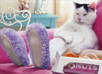 Cat Wearing Slippers (1 card/1 envelope) - Just For Fun Card  INSIDE: Life's hard� Donuts help!