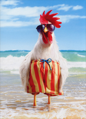 Rooster Wears Swimsuit (1 card/1 envelope) Avanti Funny Birthday Card  INSIDE: The older we get… the less we care!  Happy Birthday