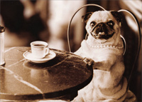 Cafe Pug (1 card/1 envelope) - Blank Card