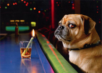 Dog at Bar with Shot Glass (1 card/1 envelope) - Birthday Card  INSIDE: Happy Birthday, Hot Shot!