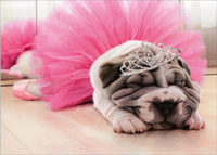 Tired Sharpei Ballerina (1 card/1 envelope) - Birthday Card  INSIDE: Still the fairest of them all! Happy Birthday