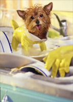 Dog Doing Dishes (1 card/1 envelope) - Thank You Card  INSIDE: Thanks for lending a hand!
