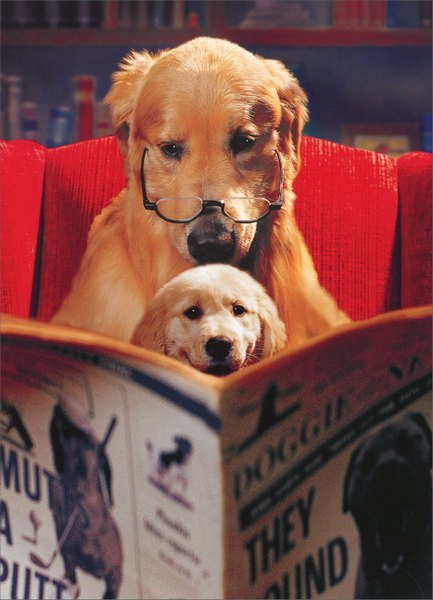 Dogs Reading Paper (1 card/1 envelope) Father's Day Card - FRONT: No text  INSIDE: Sometimes doing nothing special is the most special of all!  Happy Father's Day