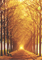 Sunlit Park With Row Of Trees (1 card/1 envelope) Avanti Deluxe Matte Blank Card