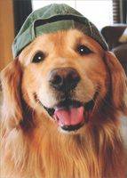 Golden Retriever Baseball Cap (1 card/1 envelope) Avanti Deluxe Matte Dog Blank Card
