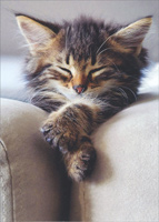 Sleeping Kitten With Folded Paws (1 card/1 envelope) - Blank Card