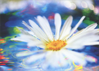 Floating Daisy In Colored Water (1 card/1 envelope) - Blank Card
