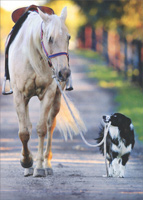 Dog And Horse Walking (1 card/1 envelope) - Blank Card