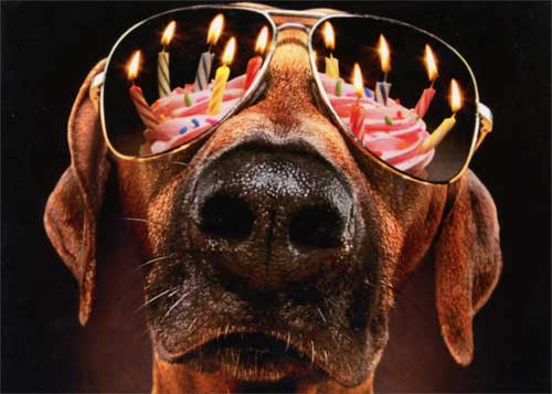 Dog Birthday Candles Sunglasses Funny Birthday Card Greeting Card