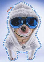 Cool Chihuahua In Goggles & Robe Sticker Card (1 card/1 envelope) Avanti Peel and Stick Dog Birthday Card