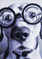 Dalmatian Wearing Goggles (1 card/1 envelope) - Birthday Card  INSIDE: Old age is closer than it appears! Happy Birthday