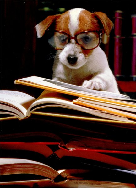 Puppy with Books (1 card/1 envelope) Funny Graduation Card - FRONT: No text  INSIDE: Cute and smart!  Congratulations