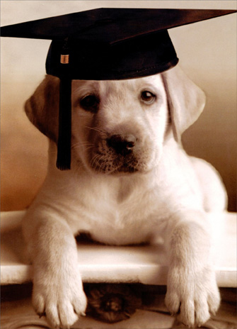 Puppy with Grad Cap (1 card/1 envelope) - Graduation Card - FRONT: No text  INSIDE: Dog-gone smart!  Congratulations