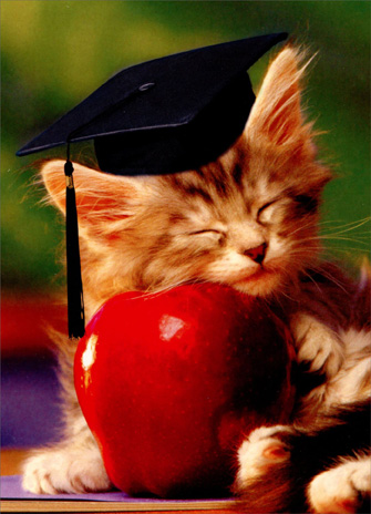 Kitten on Apple (1 card/1 envelope) Funny Graduation Card - FRONT: No text  INSIDE: The tassel is worth the hassle!  Congratulations on your graduation