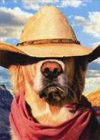 Dog With Straw Hat (1 card/1 envelope) Avanti Funny Golden Retriever Birthday Card