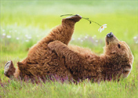 Bear Smells Flower (1 card/1 envelope) - Birthday Card  INSIDE: Love you from my nose to my toes! Happy Birthday