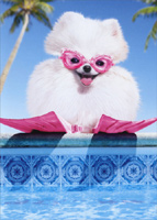 Fluffy Dog In Swim Goggles (1 card/1 envelope) Avanti Funny Pomeranian Birthday Card