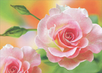 Pink Rose In Full Bloom (1 card/1 envelope) - Blank Card