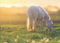 Grazing Horse At Dawn (1 card/1 envelope) Avanti Deluxe Matte Blank Card