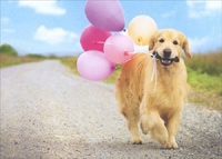 Golden Dog Carrying Balloons (1 card/1 envelope) Avanti Deluxe Matte Blank Card