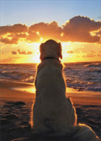 Dog Sitting On Beach At Sunset (1 card/1 envelope) - Pet Sympathy Card  INSIDE: A faithful friend, a great companion �the memories are forever.