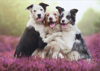 Three Dogs Hugging (1 card/1 envelope) Avanti Birthday Card