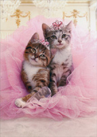 Kittens Sharing Tutu (1 card/1 envelope) Avanti Cat Birthday Card