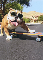 Bulldog/Sunglasses/Skateboard (1 card/1 envelope) Avanti Funny Dog Birthday Card